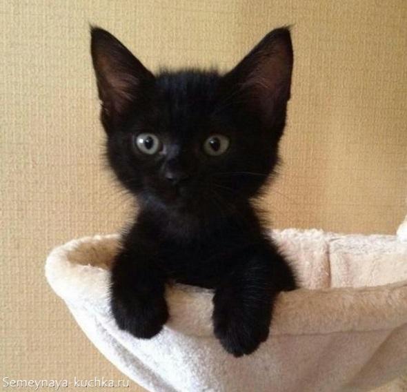 милый черный котик