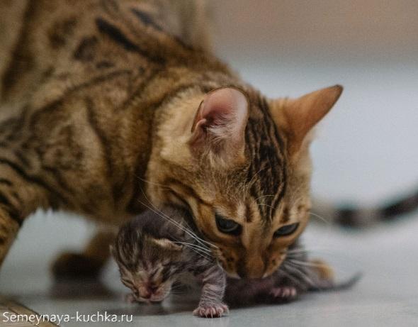 милый котик со своей мамой кошкой