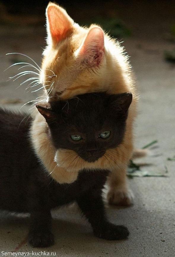 милые котики рыжий и черный обнимаются