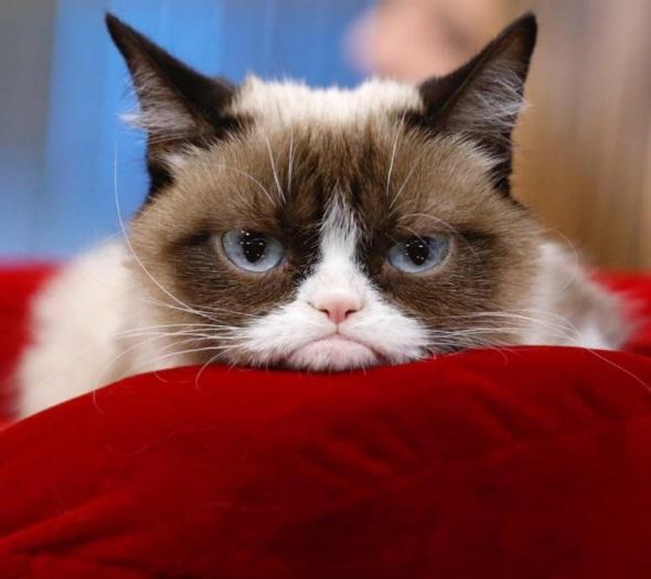 милый котик на красной подушке