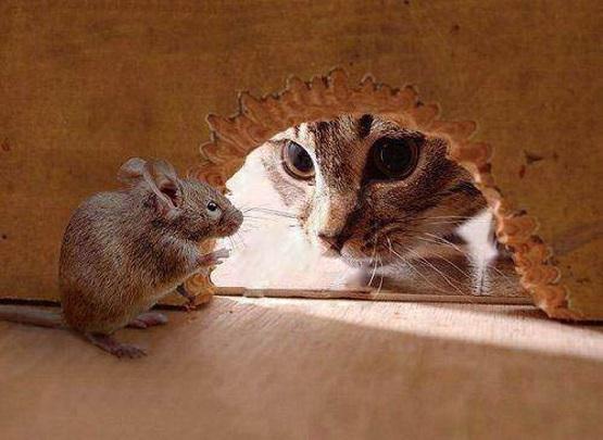 мышь в норке кошка смотрит