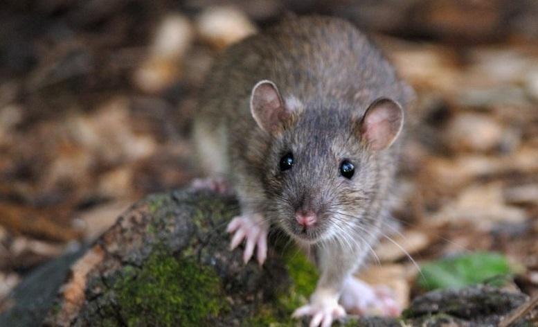 мышка в лесу
