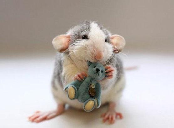 мышка держит игрушку