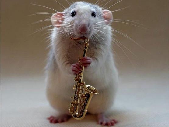 мышь играет на саксофоне фото