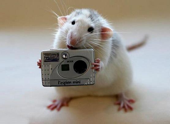 мышь с фотоаппаратом фото