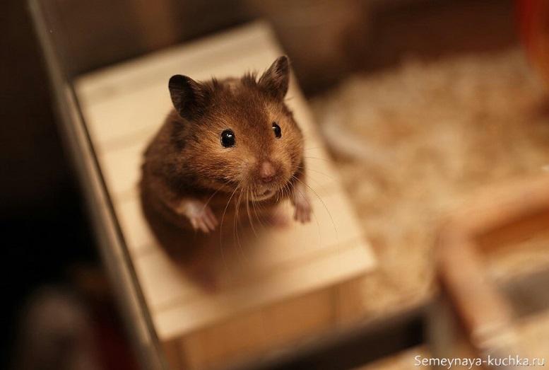 мышь фото на табуреточке