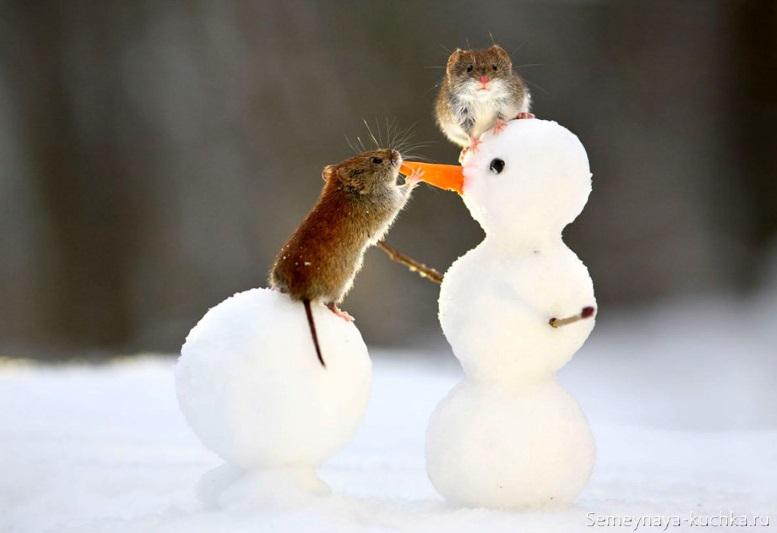 мышь новогоднее фото снеговик морковь