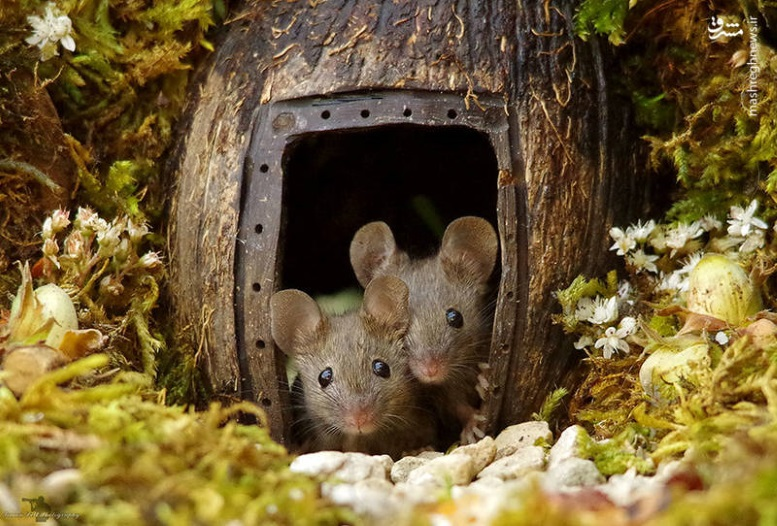мышки в домике фото