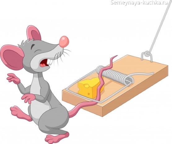 крыса в мышеловке с сыром картинка