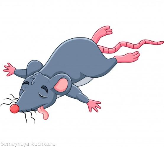 картинка дохлая крыса мышь