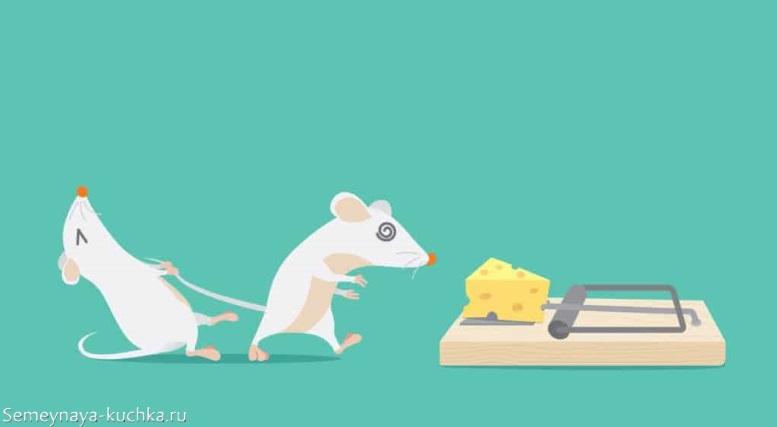 мышки крадутся к мышеловке с сыром