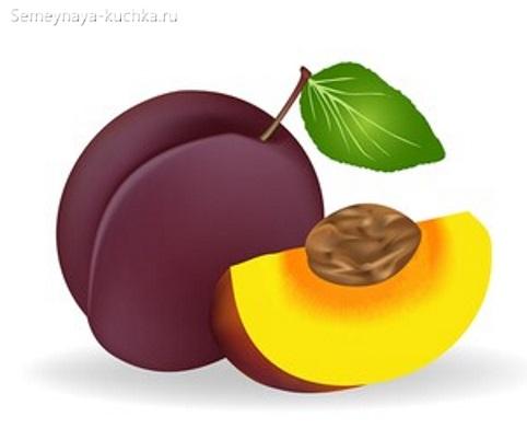 картинка фрукт слива с косточкой