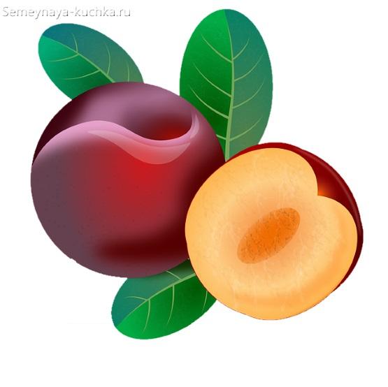 картинка фрукт слива
