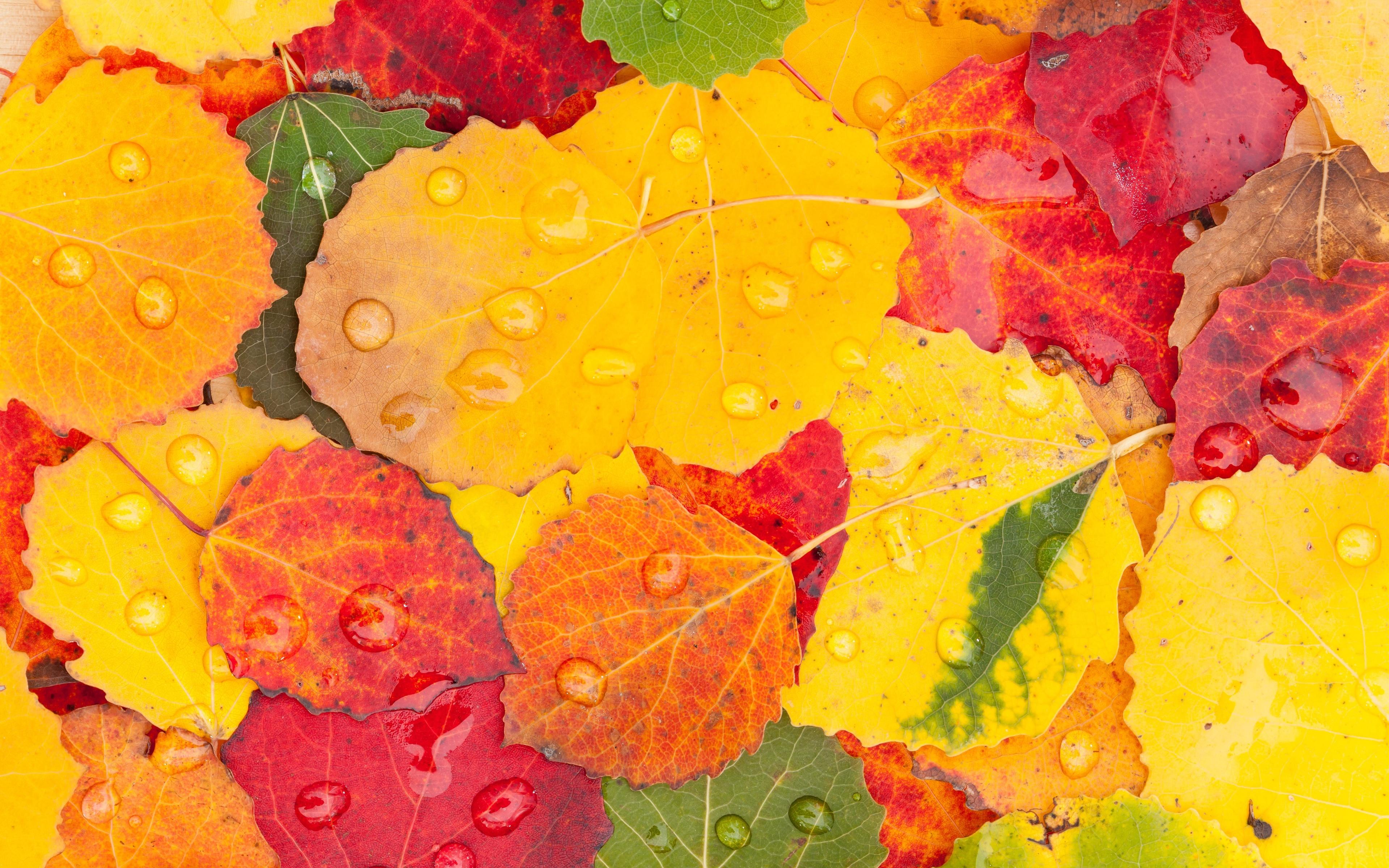 картинки листопад под дождем