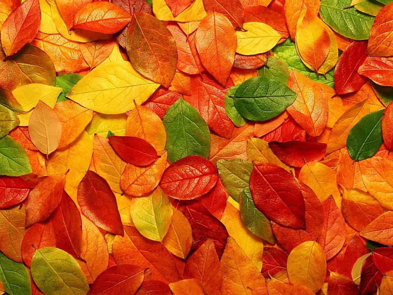картинки листопад