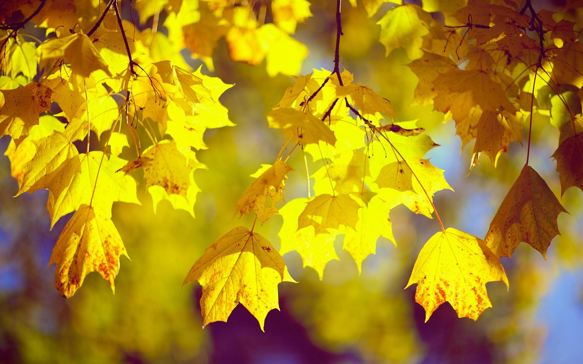 картинки листопад желтые листья