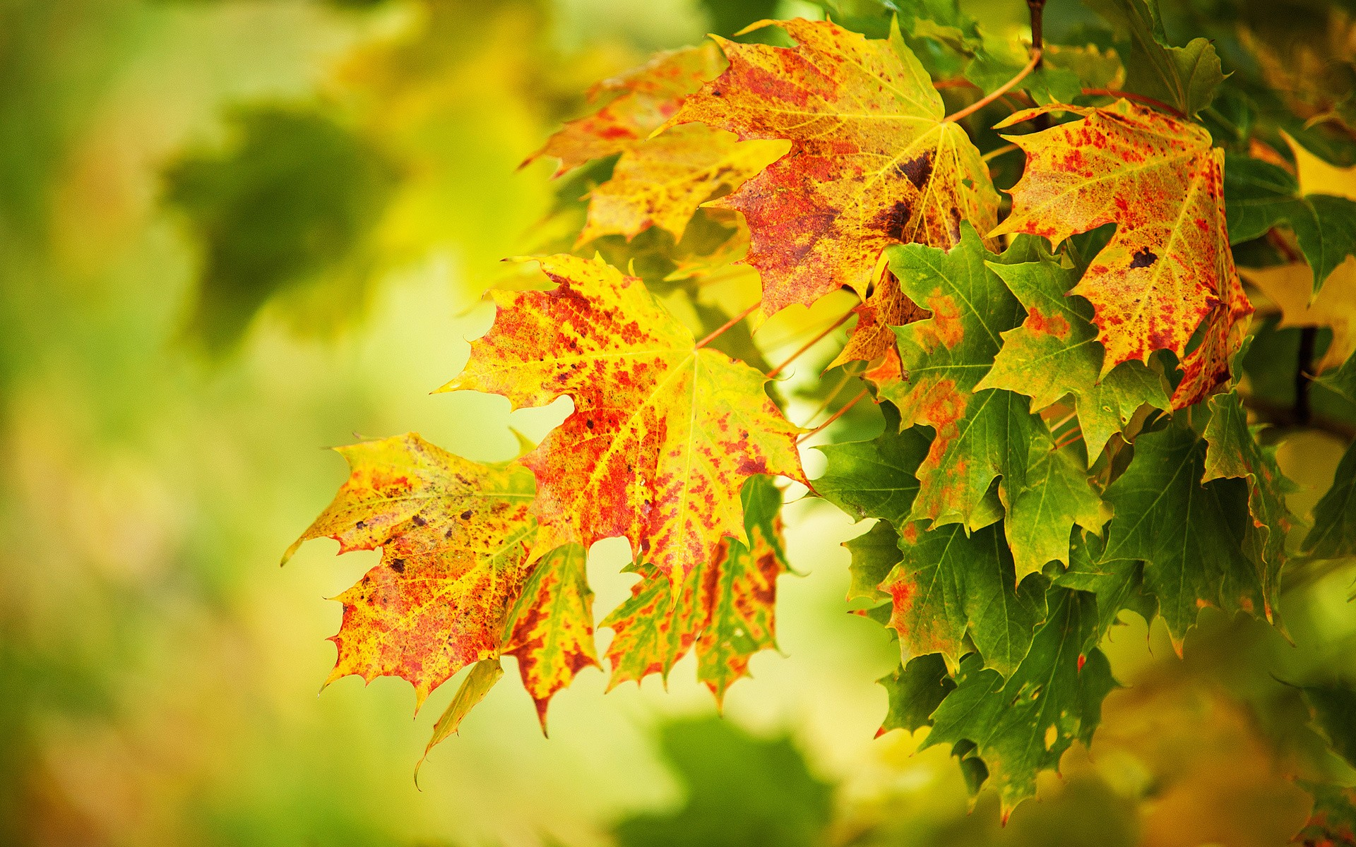 картинки листопад зеленый