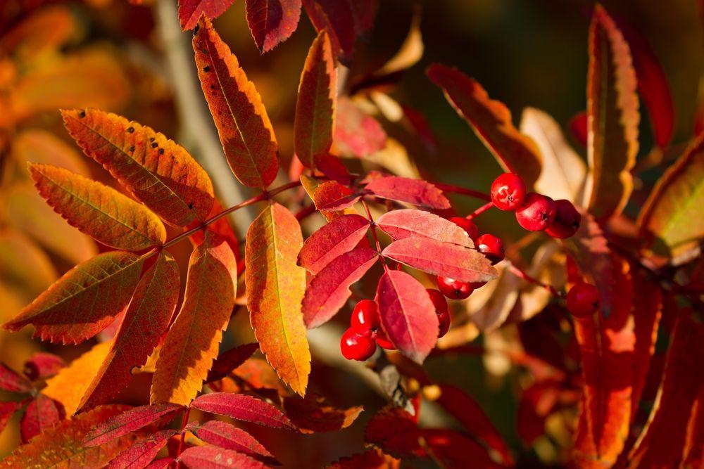 картинки листопад ковер из листьев