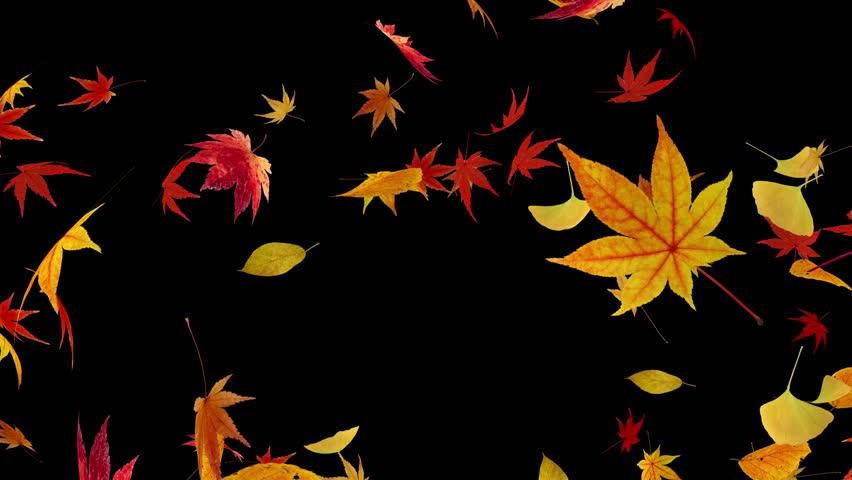 картинки листопад ночью