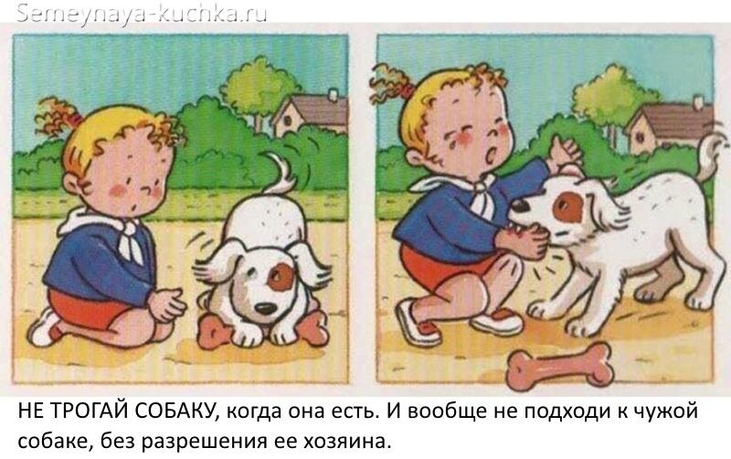 картинки безопасность не подходи к собаке