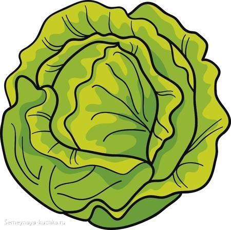 картинка капуста овощи для детского сада