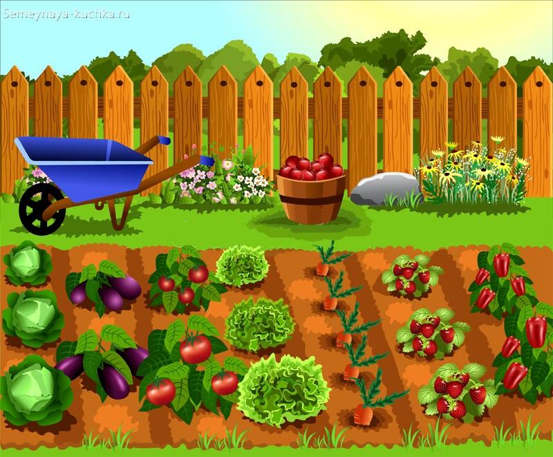 картинка огород с овощами