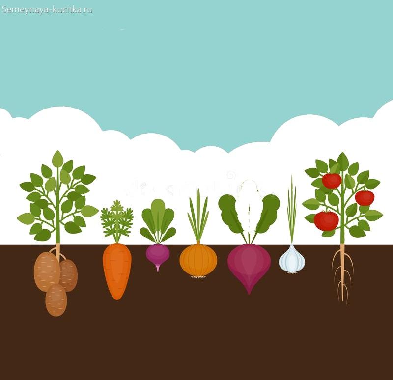 как растут овощи картинки для детского сада