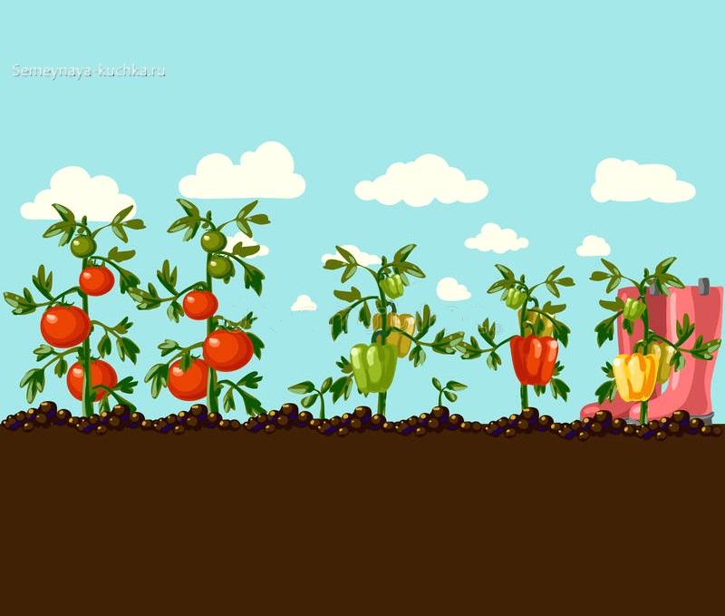 картинка как растут овощи в огороде