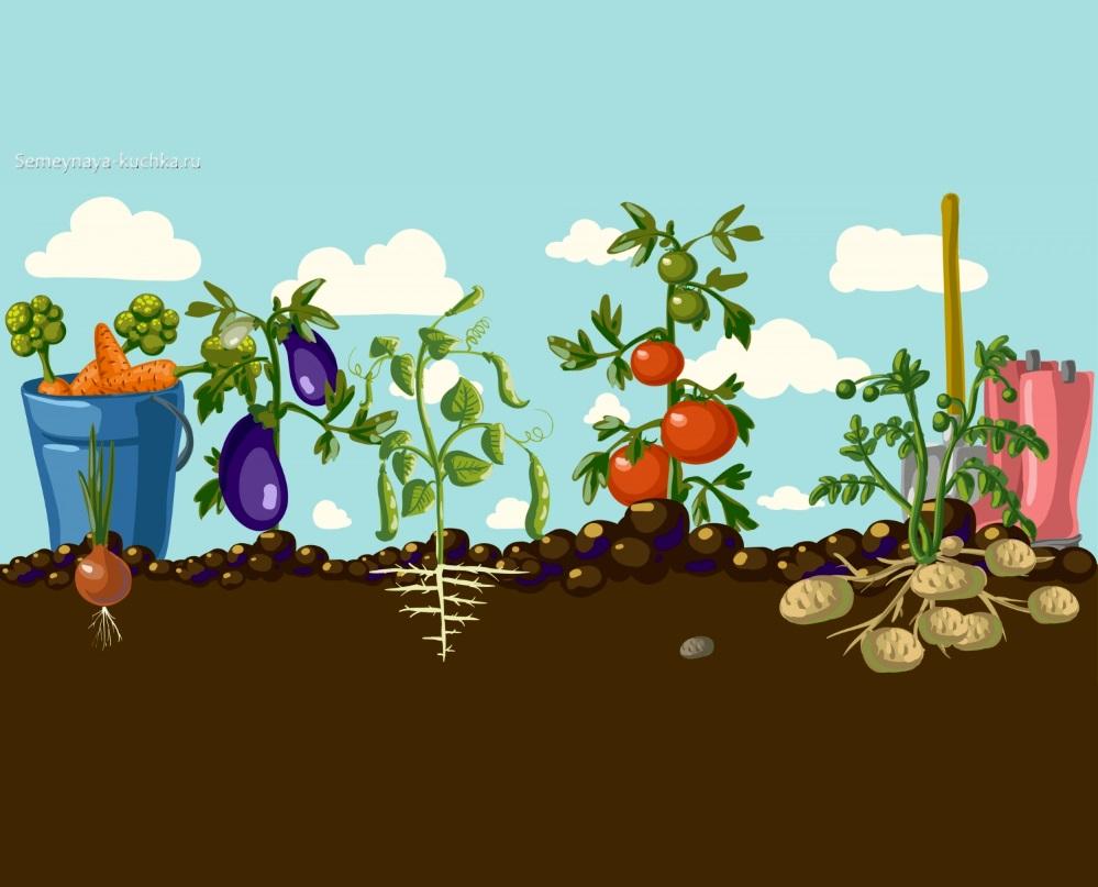 картинка как растут овощи в земле с корнями