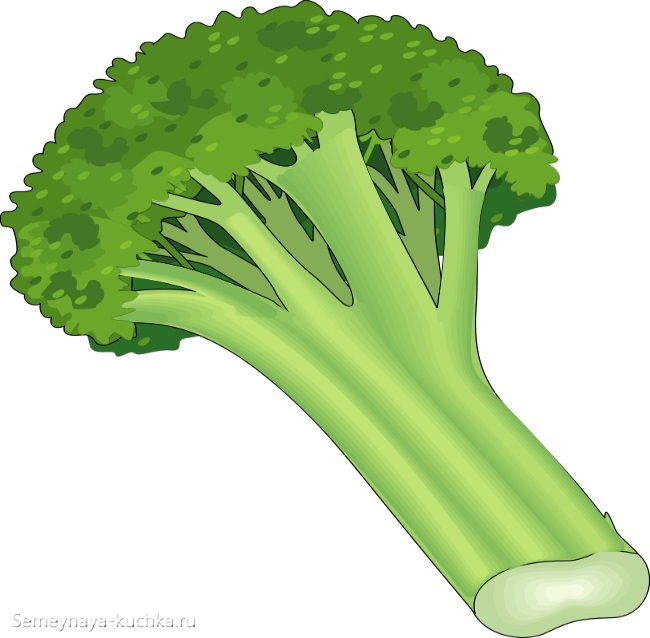 картинка брокколи зеленые овощи