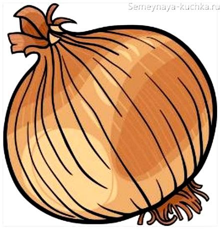 картинка овощ лук