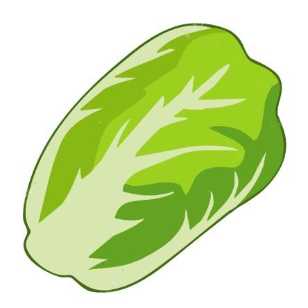 картинка овощи пекинская капуста