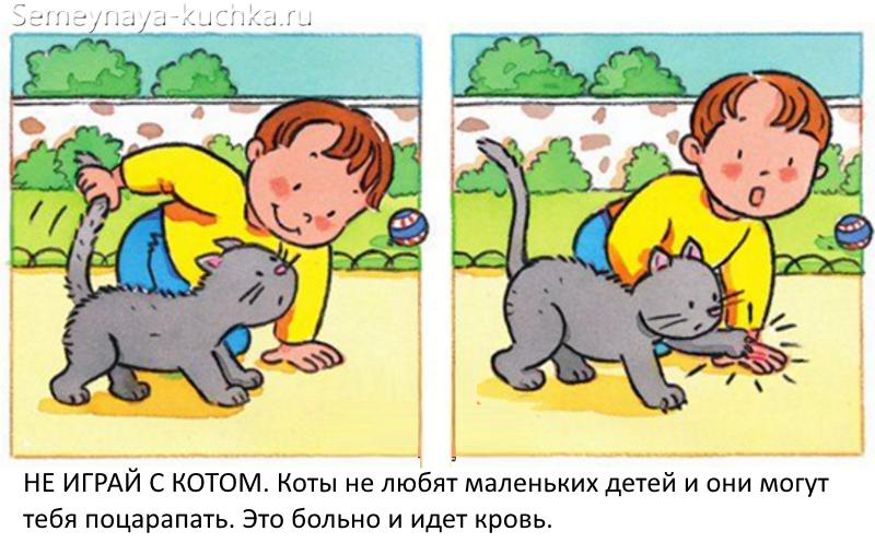 картинки безопасность не трогай кошку