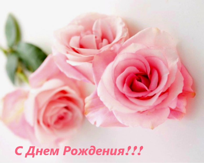 картинка розы с днем рождения