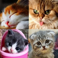 фото красивые котята