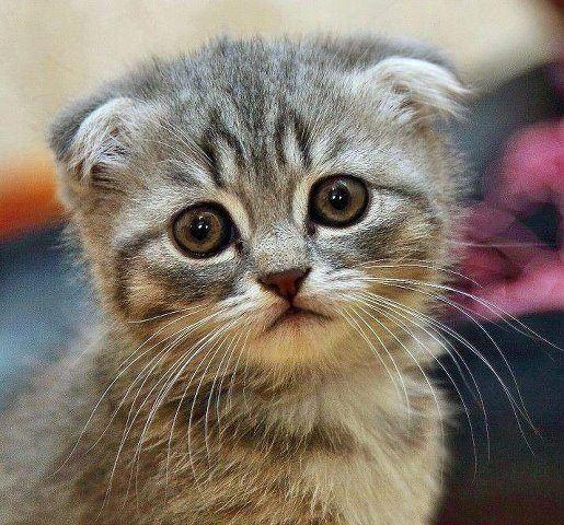 грустный котенок фото