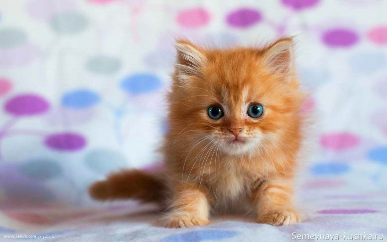 рыжий пушистый котенок сидит на полу