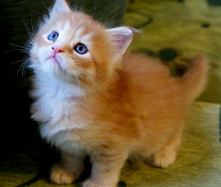 красивые котята фото рыжие