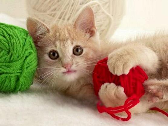 котенок с клубками фото