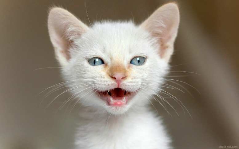 маленький белый котенок мяукает худой