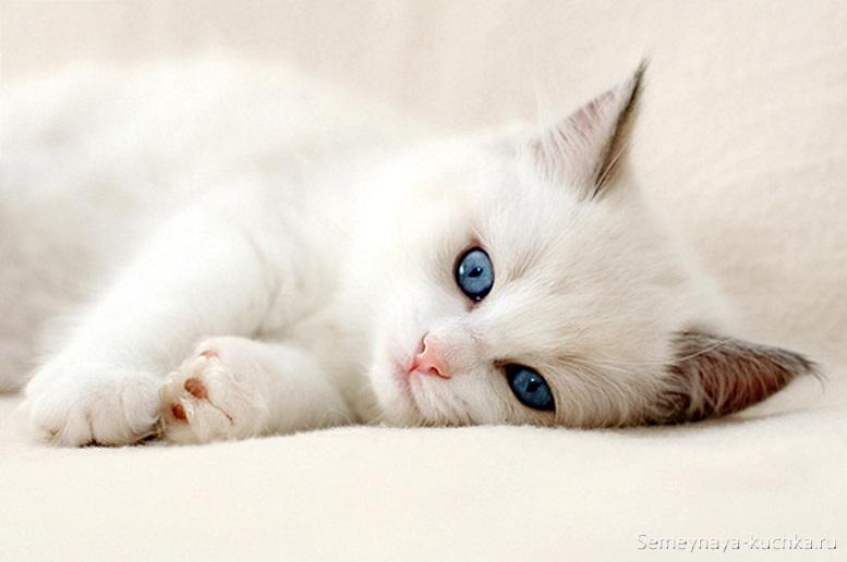 красивые белые котята фото
