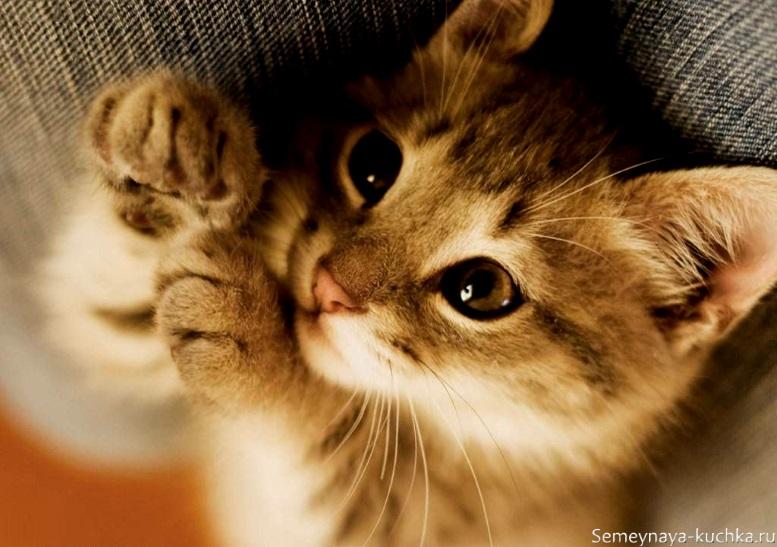 задумчивый котенок красивое фото