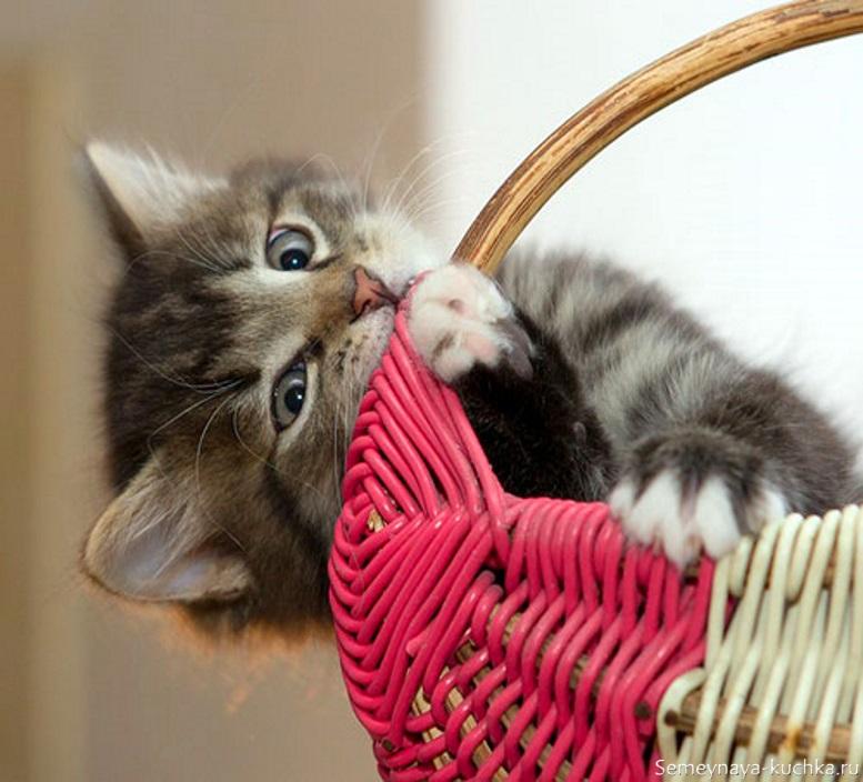 котенок грызет корзину
