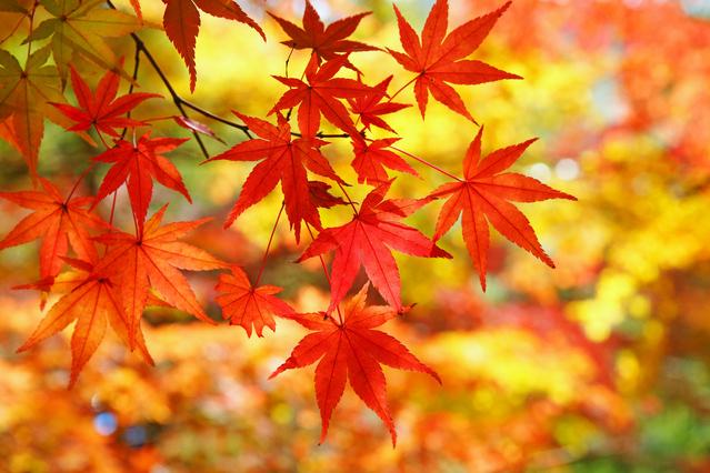 красивые оранжевые листья фото