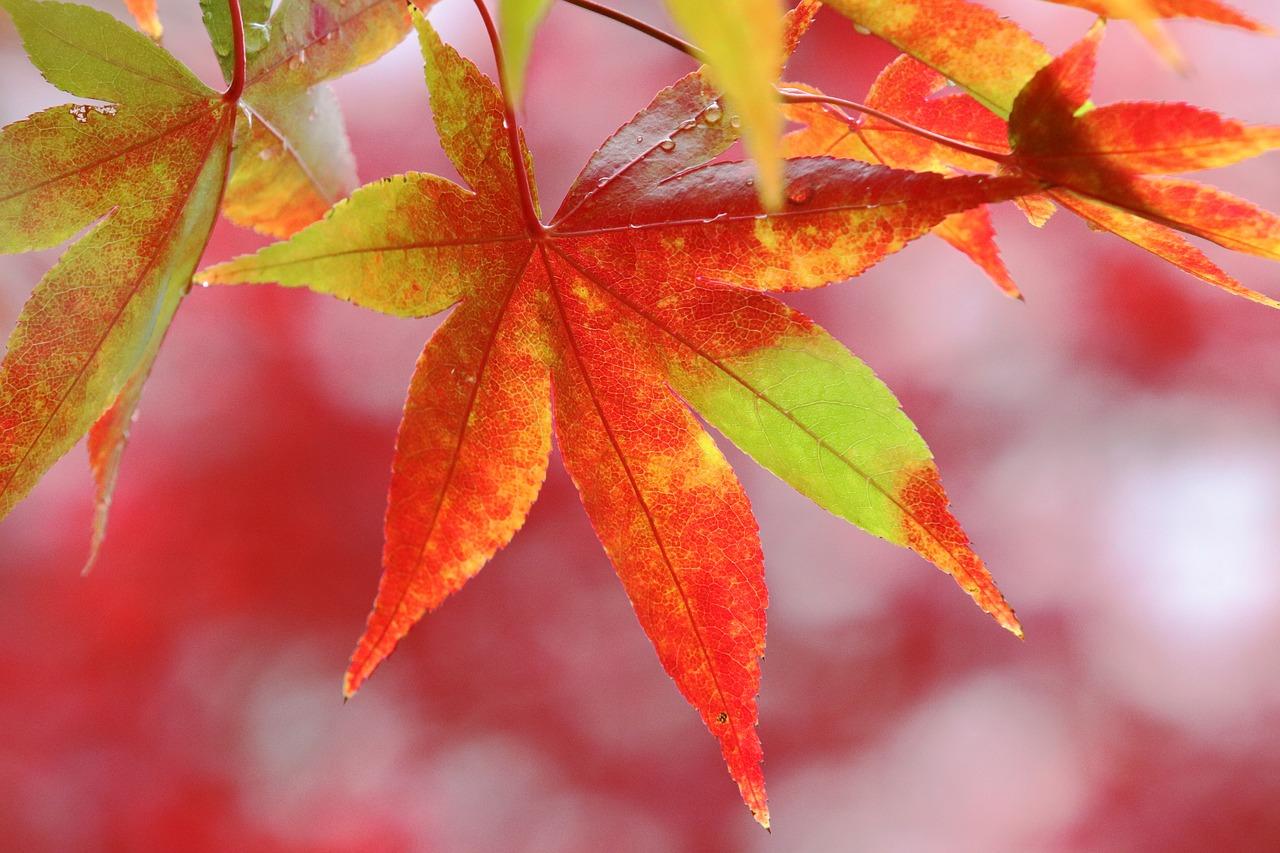 красивые листья фото осени