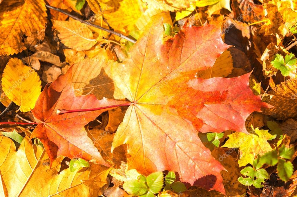 красивые листья крупные