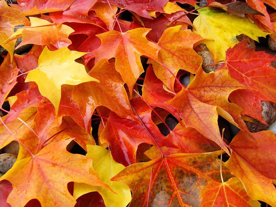 красивые оранжевые листья осенью