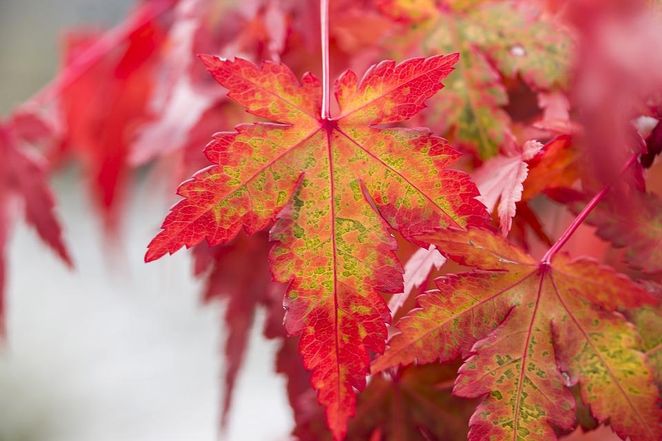 картинки красивые листья