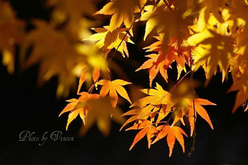 картинки красивые желтые листья