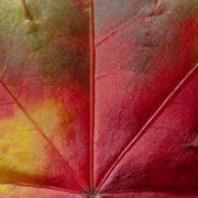 КРАСИВЫЕ ЛИСТЬЯ — 44 фото на тему осень.